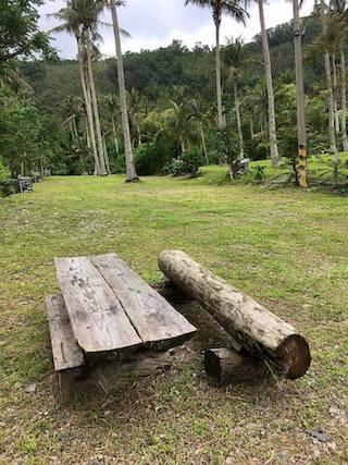 初鹿椰子林