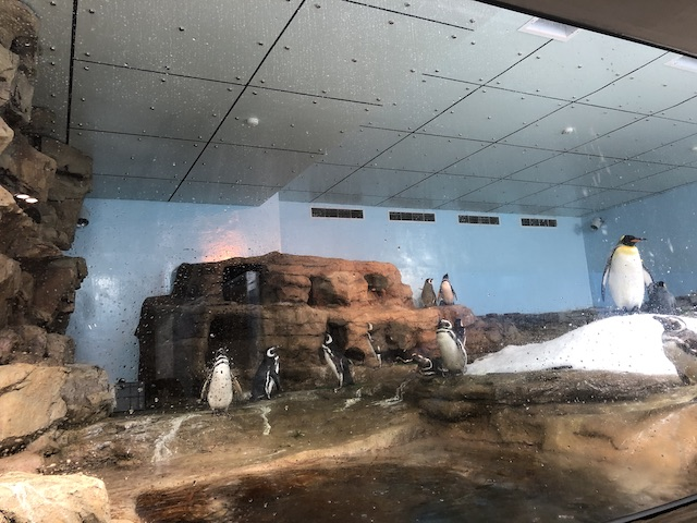 企鵝 xaprk