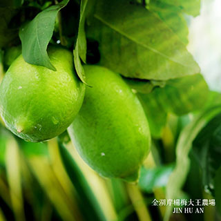 金湖岸楊梅大王