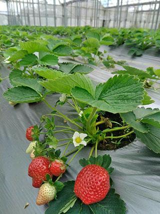 323溫室精緻農場