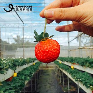 淼焱苗-蔬果有機會
